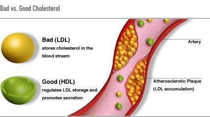 Dùng trà Atiso có thể giúp kiềm chế lượng cholesteron xấu của cơ thể