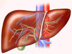 Trà Atiso có chứa cynarin và silymarin hỗ trợ làm mát gan, giải độc gan